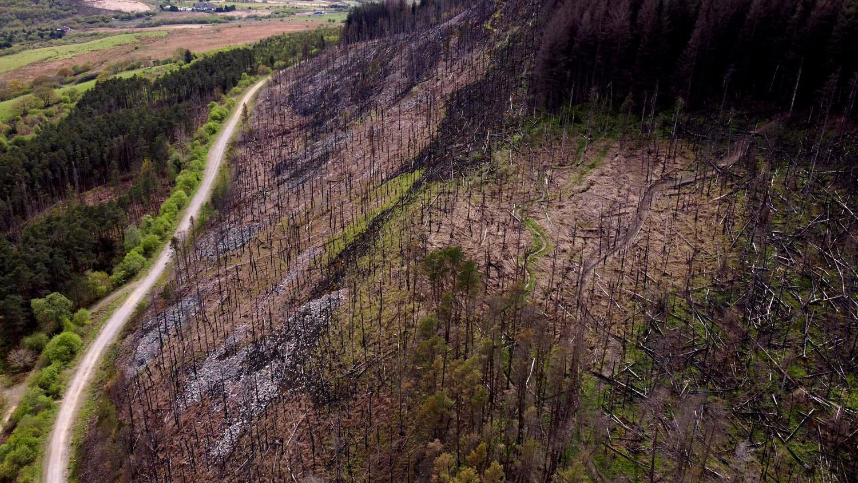 Bryn-Forest