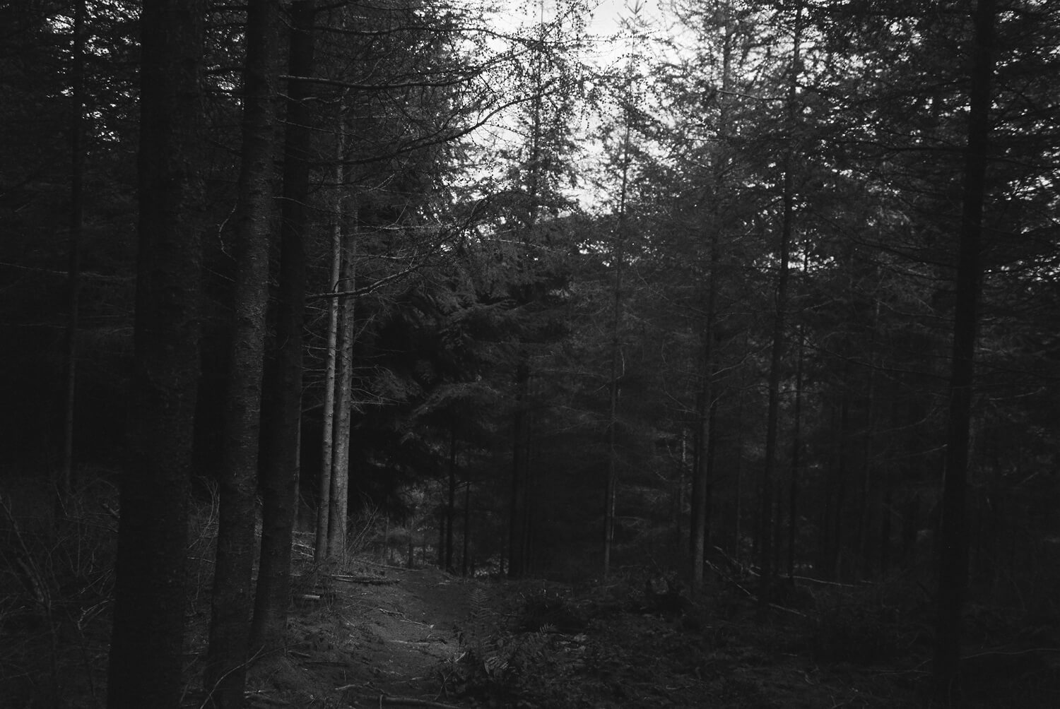 Into-the-Woods-3-2